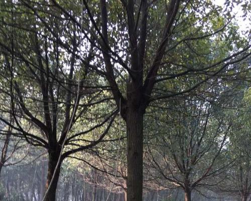 苗圃如何培养苗木?