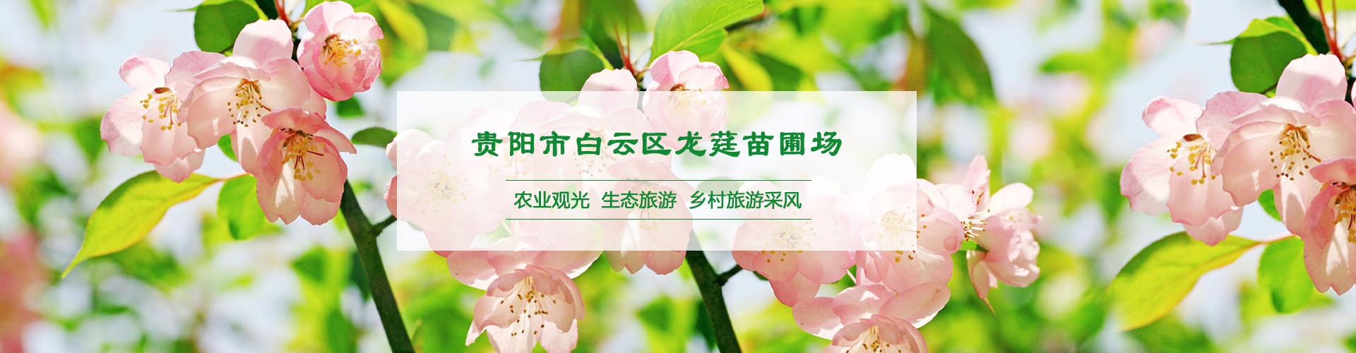 贵州海棠苗木批发