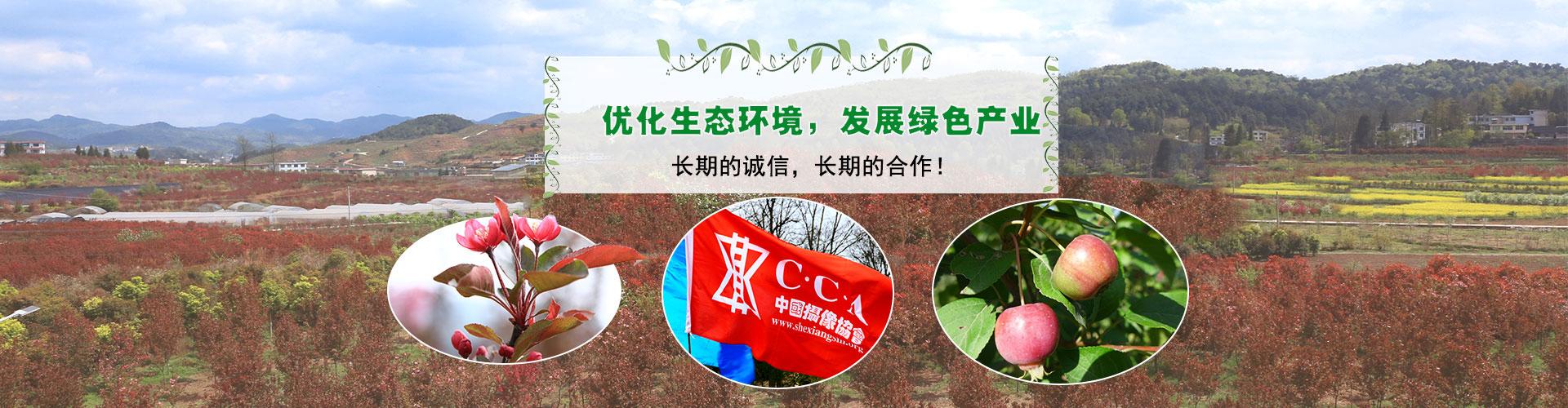 贵州绿化苗木